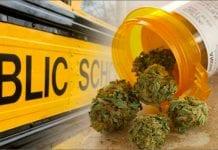 Colorado hợp pháp hóa Cần sa Y tế - Vào hôm mồng 3 tháng 5, 2016, Thượng nghị viện bang Colorado cho phép sử dụng Cần sa Y tế trong trường học. - Tạp chí cần sa Việt Nam - cansa.co