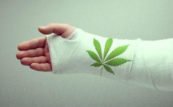 Cần sa đối phó lại các bệnh về xương như thế nào? - Tạp chí Cần sa Việt Nam - cansa.co