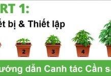 Canh tác Cần sa #1: Thiết bị & Thiết lập - Tạp chí Cần sa Việt Nam - cansa.co