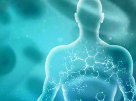 Hệ thống Endocannabinoid: hướng dẫn cho người mới - Tạp chí Cần sa Việt Nam - cansa.co