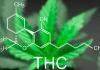 Tetrahydrocannabinol - THC là gì - Tạp chí Cần sa Việt Nam - cansa.co